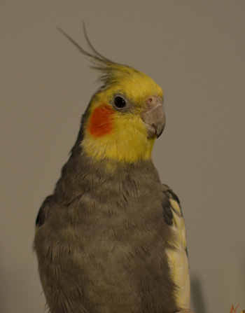 care-for-birds-exotic-pets-pittsburgh