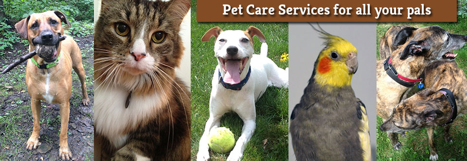 Pittsburgh Pet Care Services & Fees